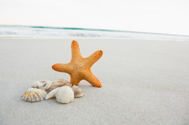 Seesterne und muscheln auf sand