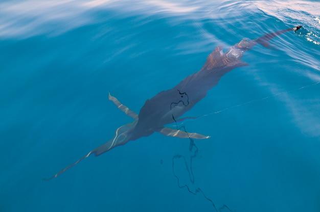 Segelfisch-sportfischerei in der nähe des bootes mit angelschnur
