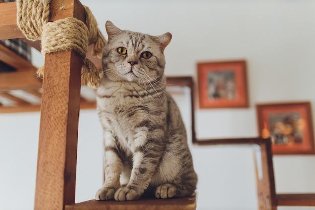 Sehr lustige katze, die über die nahaufnahme lacht.
