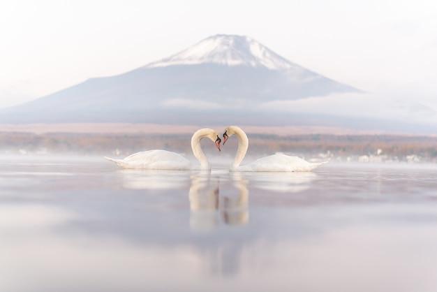 Sehr schönes weißes paar-schwan, das romantisch und liebe am see yamanaka mit dem berg sich fühlt. fuji backgroun