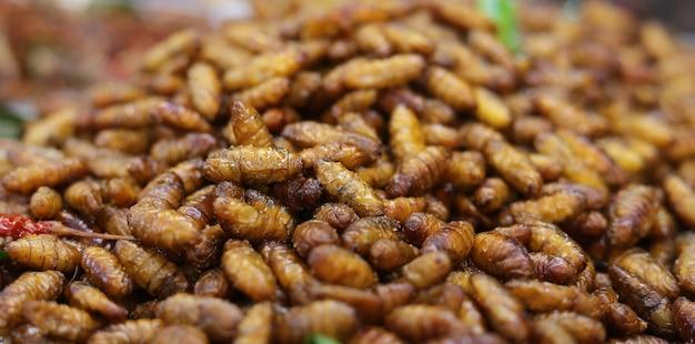 Seidenraupe ist eine larve der motte und frisst die maulbeerblätter
