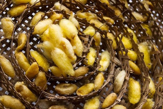 Seidenwürmer nisten im bambuskorb