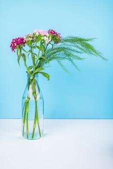 Seitenansicht der türkischen nelkenblumen der lila farbe mit spargel in einer glasflasche auf blauem hintergrund mit kopienraum
