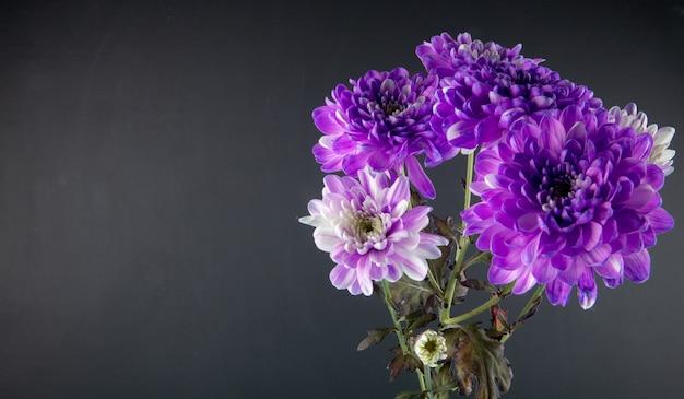 Seitenansicht des blumenstraußes der violetten und weißen farbe chrysanthemenblumen lokalisiert am schwarzen hintergrund mit kopienraum