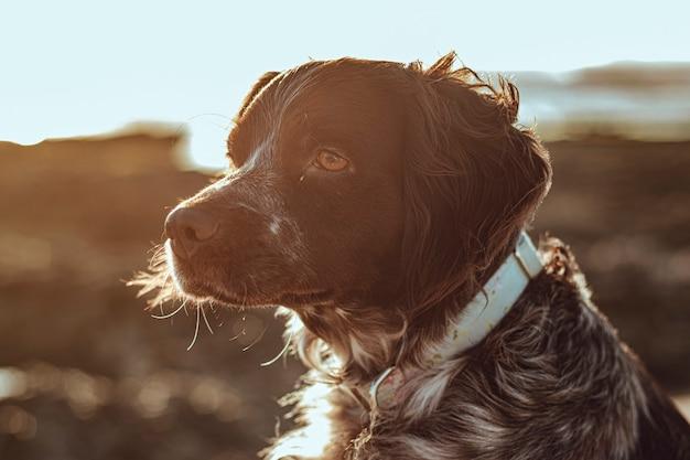 Seitenansichtsprofil eines liebenswerten haustierhundes mit einem weichen sonnenlicht