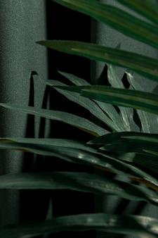 Seitlich nah herauf palmeblätter