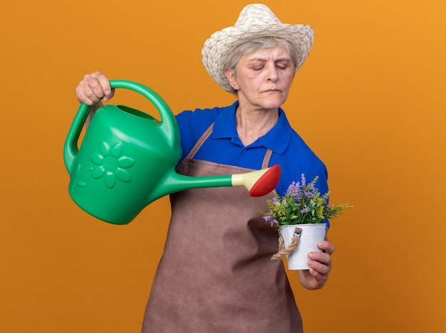 Selbstbewusste ältere gärtnerin mit gartenhut, die blumen im blumentopf mit gießkanne gießt