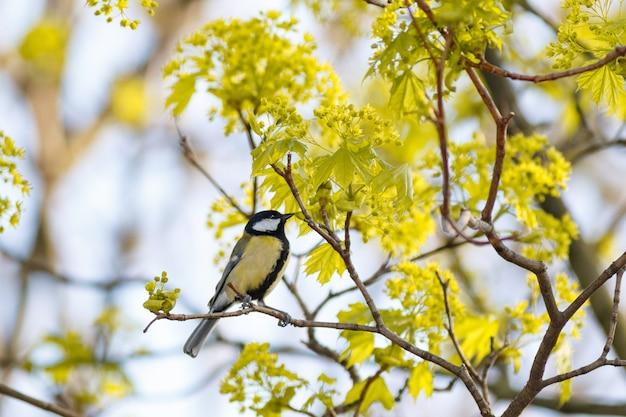 Selektive fokusansicht mit geringem winkel eines exotischen vogels auf dem ast eines baumes