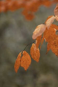 Selektive fokusaufnahme eines baumastes mit orangefarbenen blättern im herbst