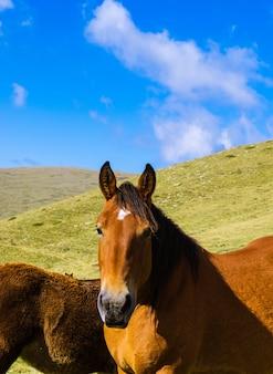 Selektive fokusaufnahme eines braunen pferdes in three peaks hill in argentinien