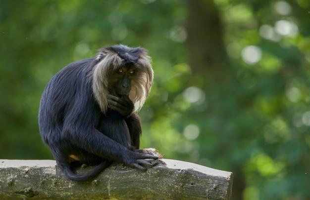 Selektive fokusaufnahme eines makaken im freien bei tageslicht