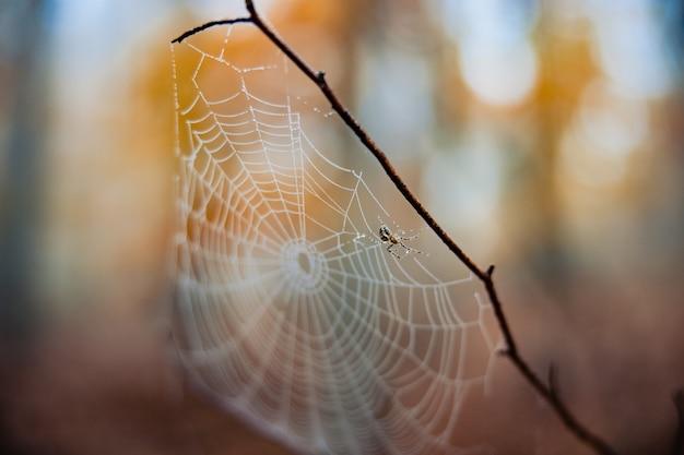 Selektive fokusaufnahme eines spinnennetzes auf einem zweig in einem herbstlichen wald