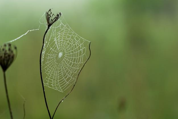 Selektive fokusaufnahme eines spinnennetzes auf einer trockenen blume
