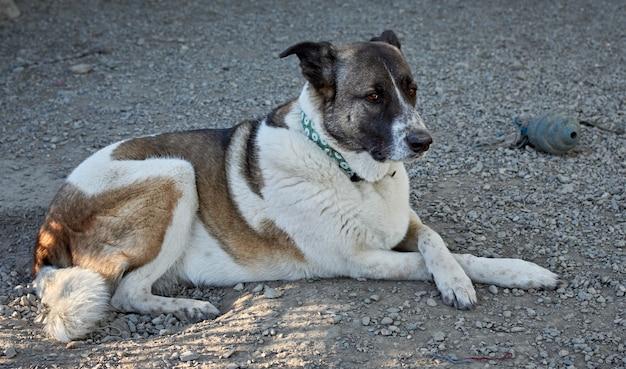 Selektive fokusaufnahme eines süßen hundes, der in einem hundeheim auf dem boden liegt
