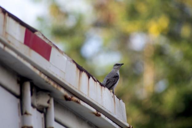 Selektive fokusaufnahme eines vogels, der auf einer rostigen weißen oberfläche sitzt