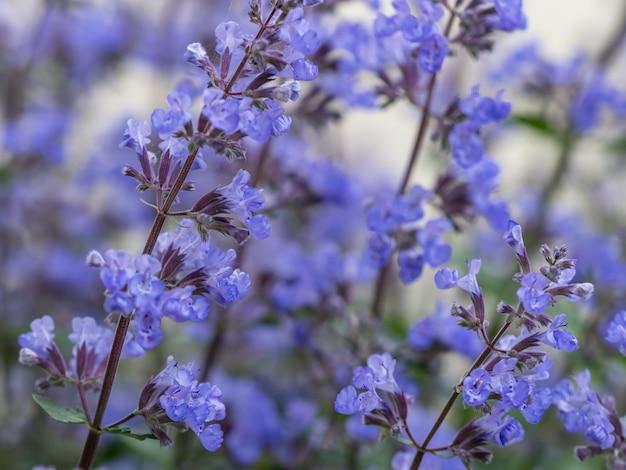 Selektive fokusaufnahme von blauem lavendel im feld