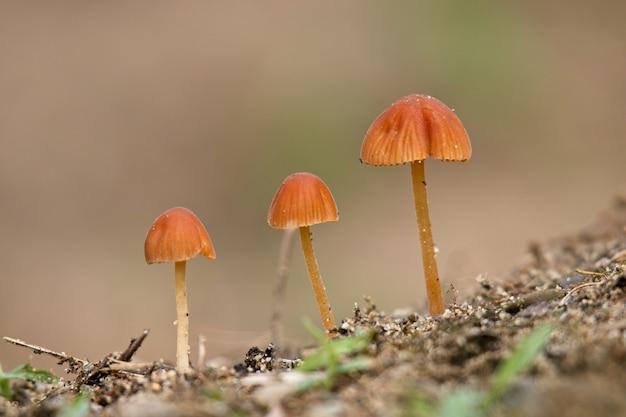Selektive fokusaufnahme von drei schönen pilzen mit einer unschärfe