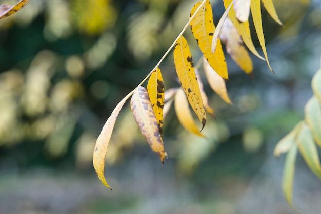 Selektive fokusaufnahme von gelben herbstblättern auf einem ast