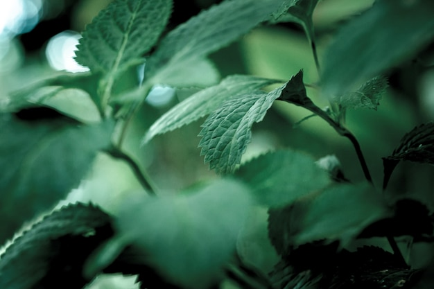 Selektive fokusaufnahme von grünen blättern