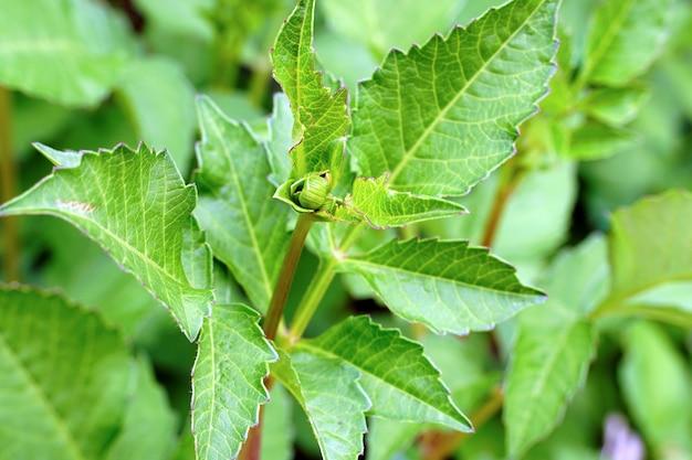 Selektive fokusaufnahme von grünpflanzen