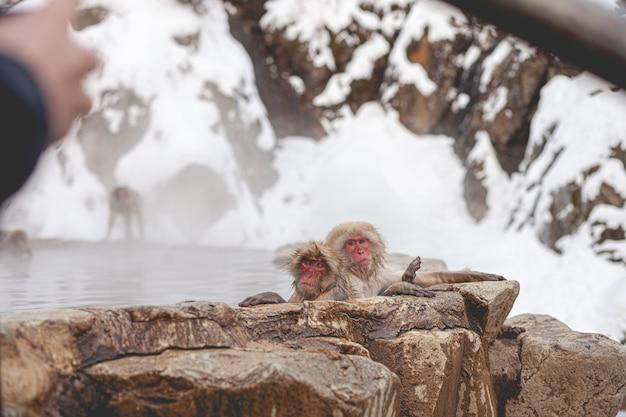 Selektive fokusaufnahme von zwei nassen makaken in der ferne in der nähe des wassers