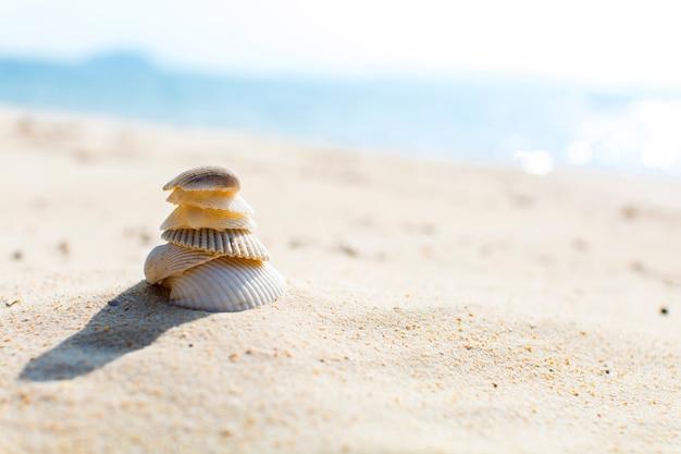Selektive fokussierte muscheln am strand. sommer hintergrundbild.