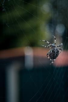Selektive nahansicht des nahaufnahmefokus einer schwarzen spinne, die auf einem netz geht