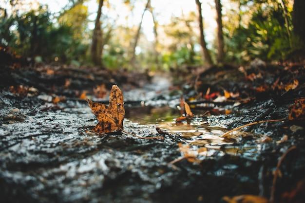 Selektive nahaufnahme von abgefallenen blättern, die mit schmutz auf wasserpfützen bedeckt sind