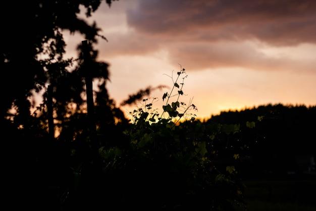 Selektive schattenbild-nahaufnahmeaufnahme von pflanzen und bäumen unter einem orangefarbenen himmel während des sonnenuntergangs
