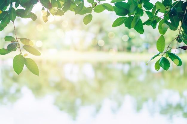 Selektiver fokus auf naturpark bokeh green park viele bäume in der sonnenuntergangszeit mit flare hellem hintergrund.