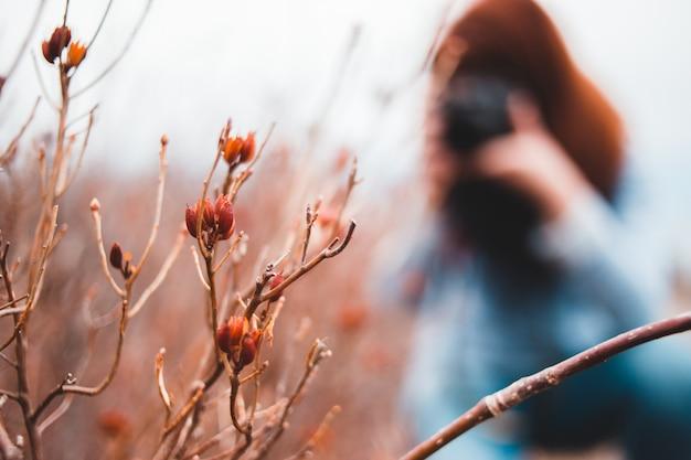 Selektiver fokus der pflanze mit frau hinter dem halten der kamera