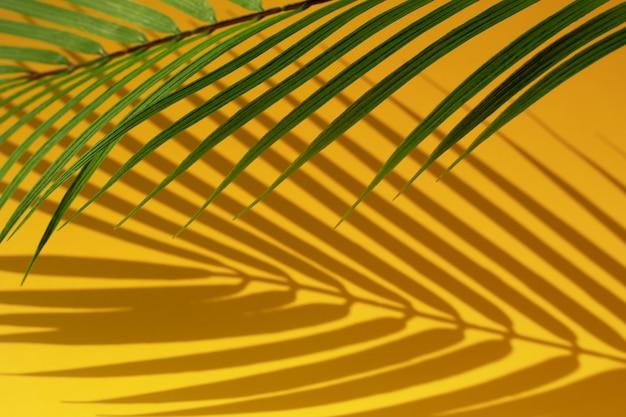 Selektiver fokus des exotischen kokosnussblatts mit schatten auf farbhintergrund