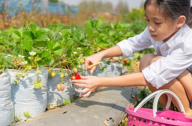 Selektiver fokus des mädchens, das frische rote bio-erdbeeren im garten pflückt