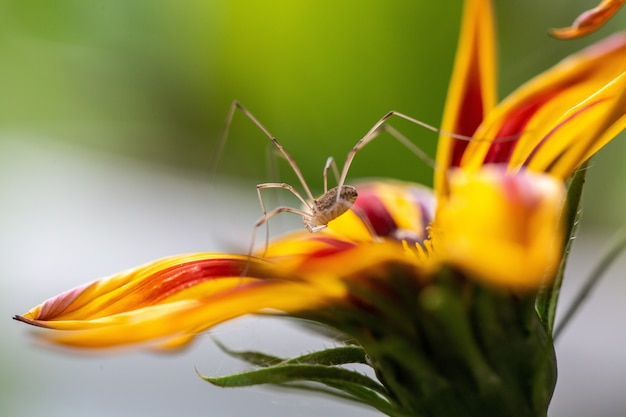 Selektiver fokus einer gelben blume mit roten flecken auf den blütenblättern