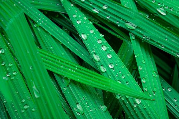 Selektiver fokus frische grüne blätter mit regentropfen.