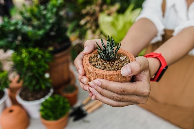 Selektiver fokus, grüne zimmerpflanzen im topf in den händen einer jungen gärtnerfrau