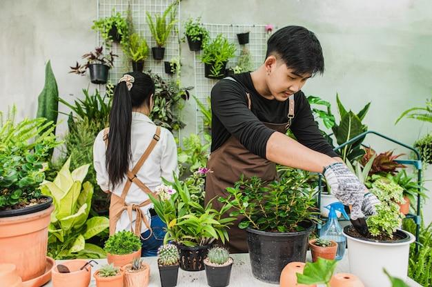 Selektiver fokus, junger mann verwendet schaufeltransplantation und kümmert sich um zimmerpflanze, frau, die hinter ihm arbeitet