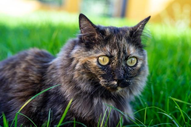 Selektiver fokusschuss der nahaufnahme einer katze, die auf dem gras sitzt