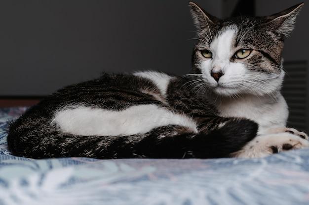 Selektiver fokusschuss der nahaufnahme einer niedlichen katze, die auf dem boden liegt