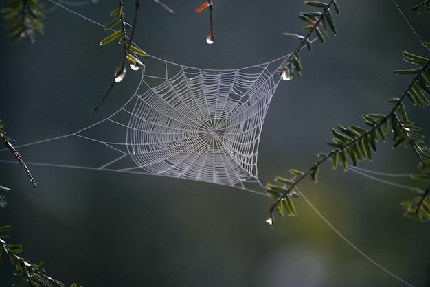 Selektiver fokusschuss der nahaufnahme eines spinnennetzes in der mitte des waldes