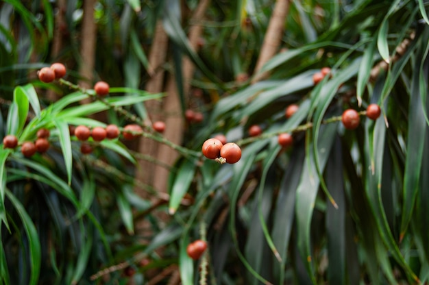 Selektiver fokusschuss der nahaufnahme von roten beeren auf einem busch mit pflanzen