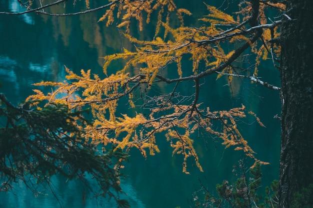 Selektiver fokusschuss des gelben lärchenbaums nahe dem wasser