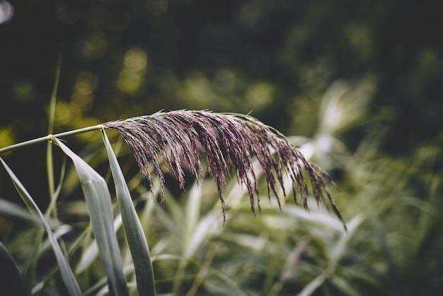 Selektiver fokusschuss einer exotischen lila pflanze in der mitte eines feldes