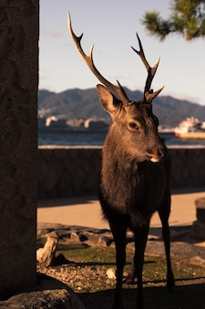 Selektiver fokusschuss eines braunen elchs während eines sonnigen tages