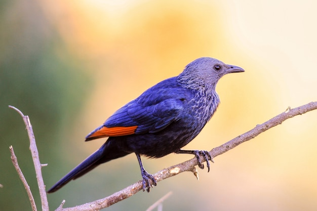 Selektiver fokusschuss eines exotischen bunten vogels auf dem dünnen ast eines baumes in einem wald