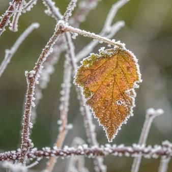 Selektiver fokusschuss eines gelben herbstblattes auf einem mit frost bedeckten zweig
