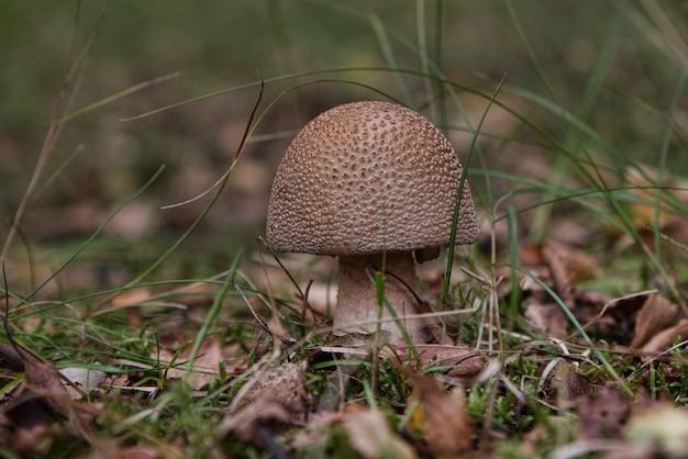 Selektiver fokusschuss eines kleinen pilzes, der im boden wächst