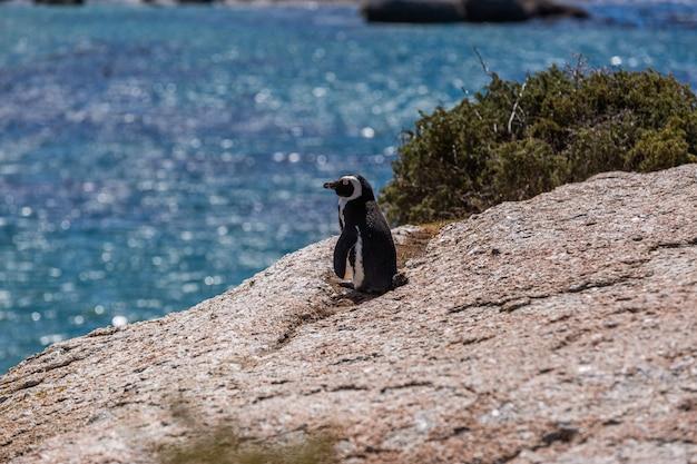 Selektiver fokusschuss eines niedlichen pinguins, der am strand in kap der guten hoffnung, kapstadt steht