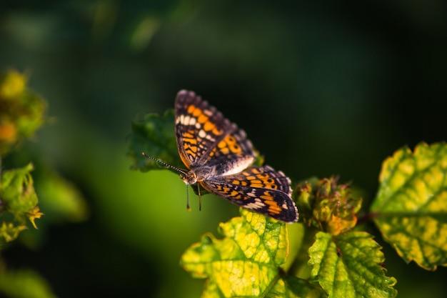 Selektiver fokusschuss eines schönen orangefarbenen schmetterlings auf einem blatt