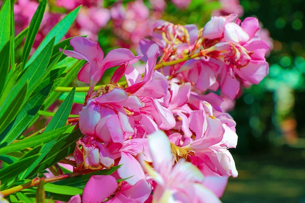 Selektiver fokusschuss von leuchtend rosa blumen mit grünen blättern
